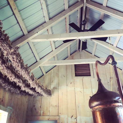 Lavender Oil Distillery