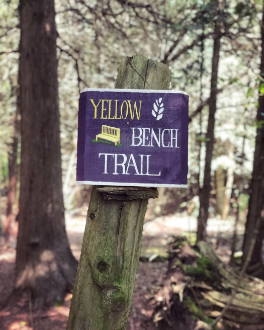 Yellow Bench Trail