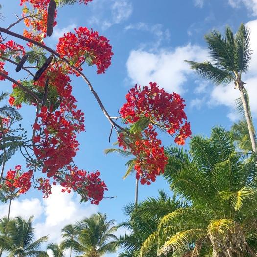 Tropical Flower Punta Cana